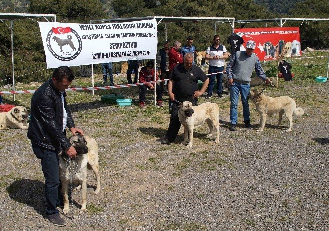 Karşıyaka'da Yerli Köpek Irkları Çalıştayı