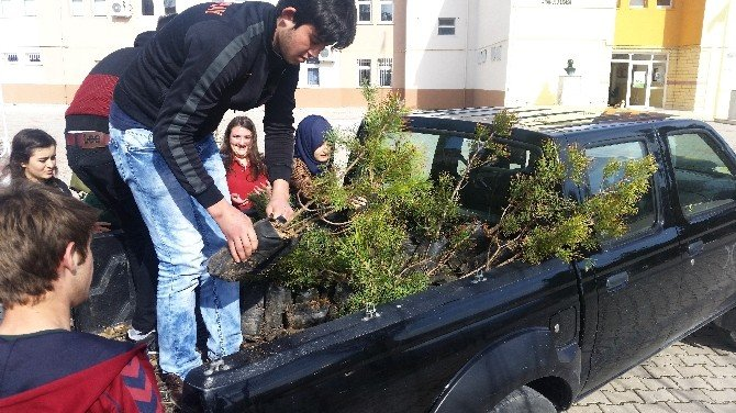 Öğrenciler 350 Fidanı Toprakla Buluşturdu