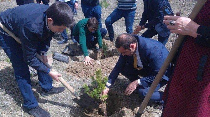 AK Partili Gençler Fidan Dikti