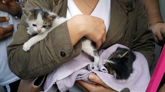İtfaiyeden Sıradışı Kedi Kurtarma Operasyonu