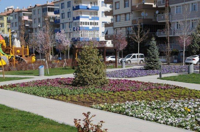 Kırşehir Belediyesi Park, Refüj Ve Şehir Merkezini Çiçeklerle Donattı