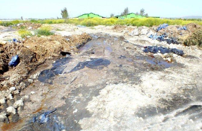 Besi Çiftliğinin Dereyi Kirlettiği İddiası