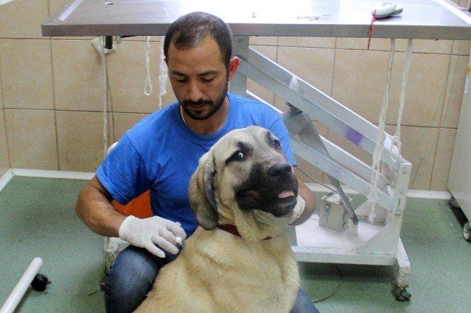 Çankaya Belediyesi'nden Sokak Hayvanlarına Hem Tedavi Hem Sıcak Yuva