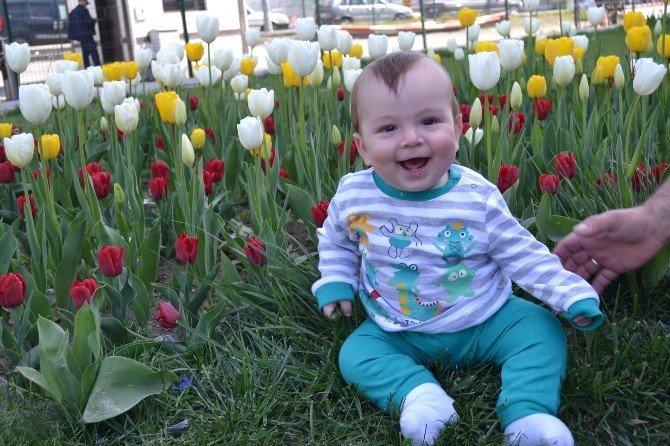 Karabük'te Laleler Çiçek Açtı