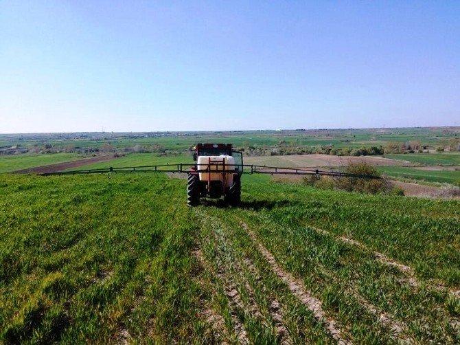 Buğday Tarlasında Yabani Otla Mücadele Çalışması