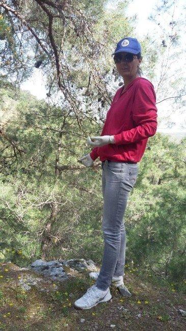 Burhaniye'de Yaban Hayvanlarına Kuduz Aşısı
