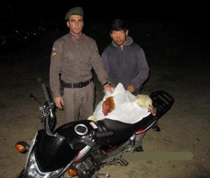 Hırsızın Çaldığı Tavukları Jandarma Geri Getirdi