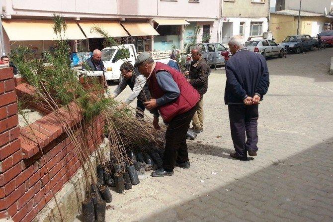 Umurbey'de Bin Adet Fidan Dağıtıldı