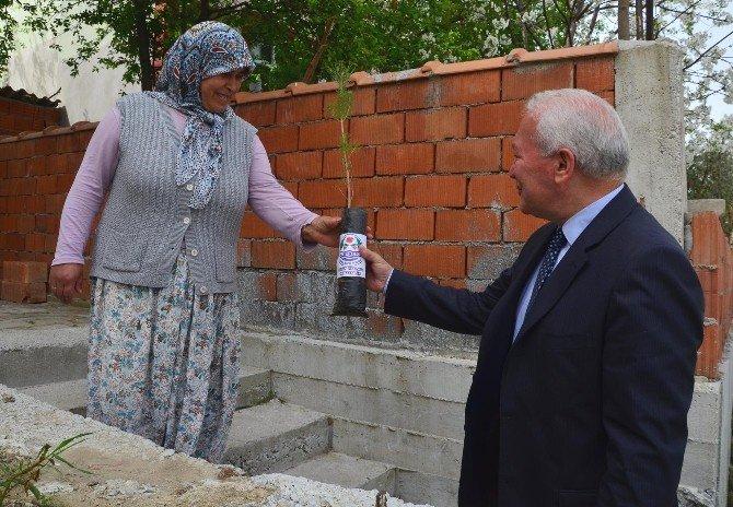 Lapseki'de Her Eve Fıstık Çamı Dağıtılıyor