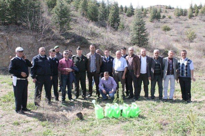 Tosya'da Polis Haftası 171 Fidan Dikimi İle Başladı