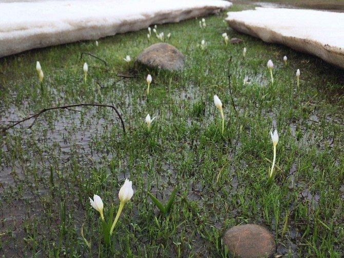Baharın Müjdecisi Kardelenler Açtı