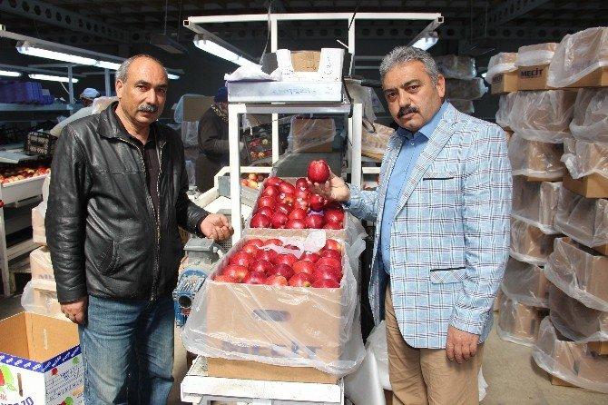 50 Bin Ton Elma Depoda Kaldı