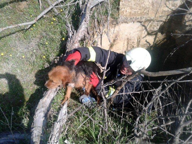 Definecilerin Kazdığı Kuyuya Düşen Köpeği İtfaiye Kurtardı