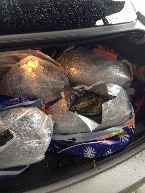 Alanya'da 51 Kilo Esrar Ele Geçirildi