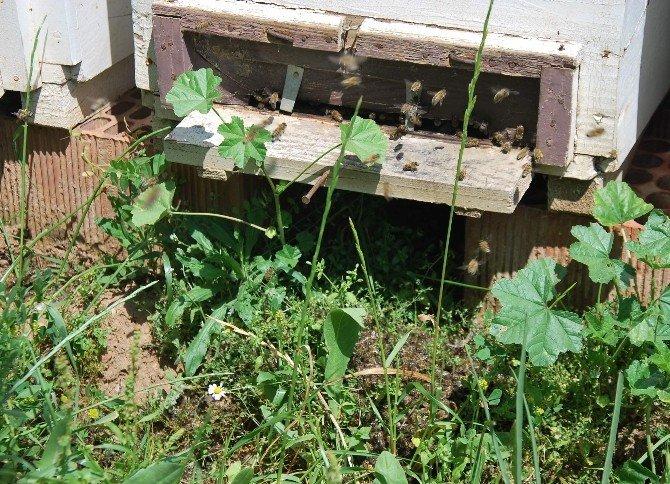 Kabızlık Sorunu Bu Defa Türk Arılarını Vurdu