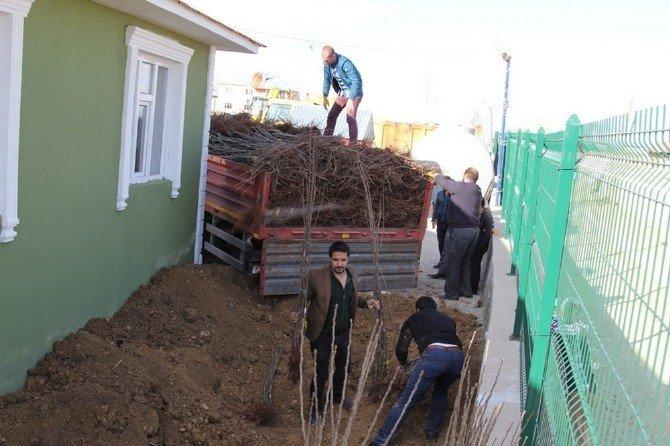 Başkale'de 'Her Evin Önünde Bir Meyve Fidanı Olsun' Projesi