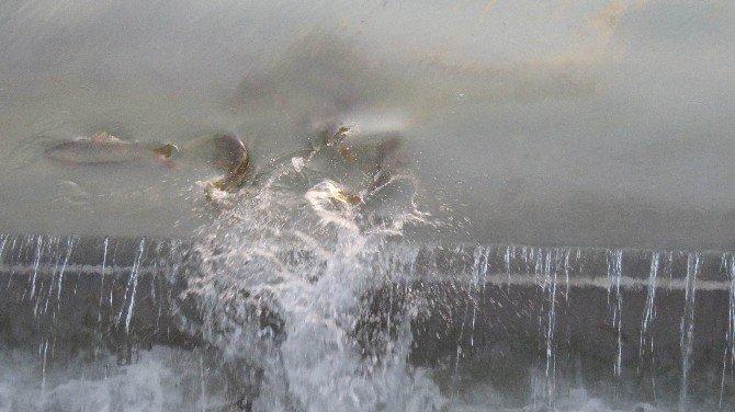 Beyşehir Gölü'nden Balık Kaçışlarına Önlem