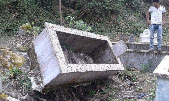 Devrilen Çam Ağacı Dört Mezarı Tahrip Etti