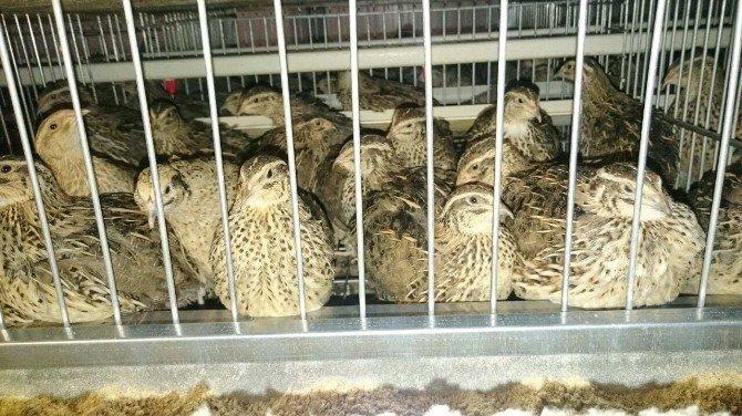 Nizip MYO'dan Bıldırcın Yumurtası Üretim Çiftliği'ne Gezi