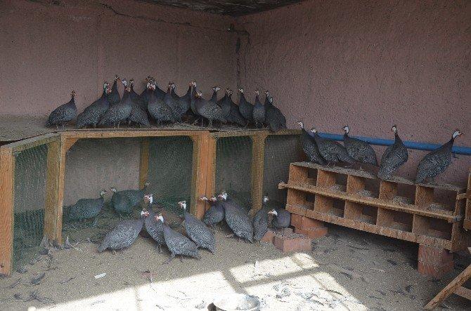 Bozüyük'te Kenelere Karşı 30 Yaban Tavuğu Doğaya Salındı