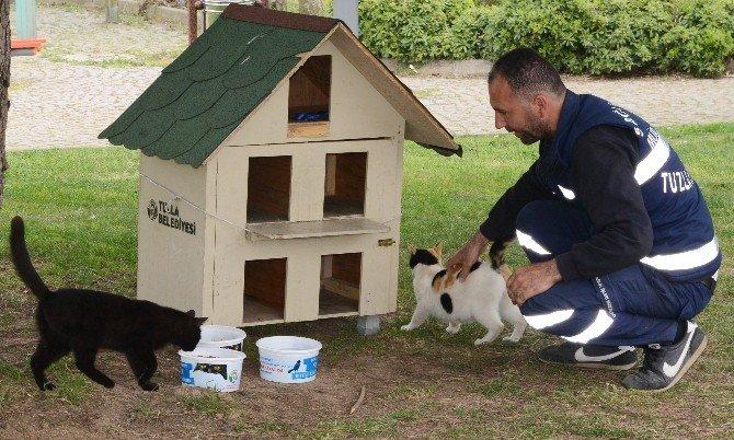Minik Misafirler Kedi Evlerine Güvenle Naklediliyor