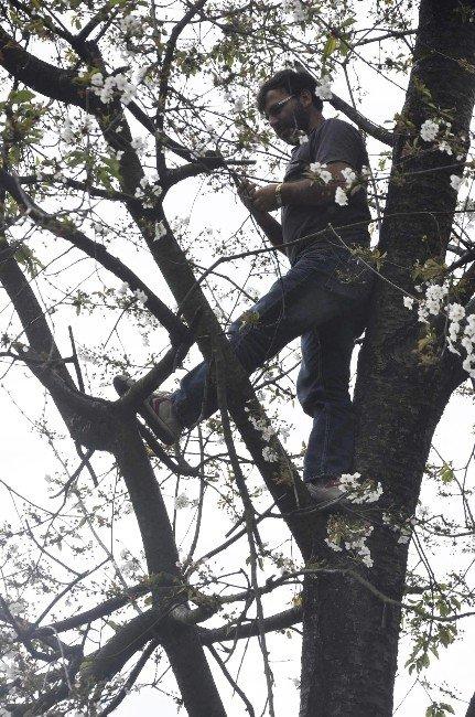 Telefonla Görüşebilmek İçin Ağaçlara Çıktılar