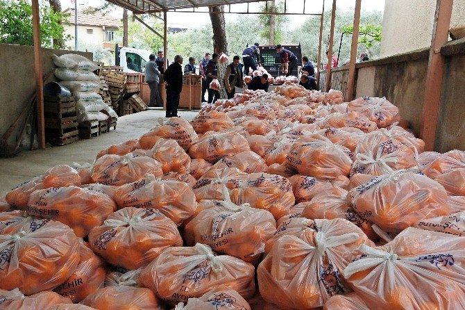 Çerçioğlu, Üreticiye Destek İçin 35 Ton Portakal Satın Aldı