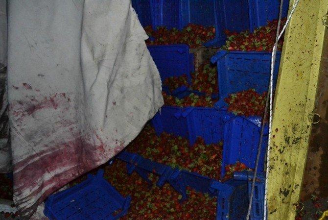 Çilek Yüklü Kamyon Devrildi: 2 Yaralı