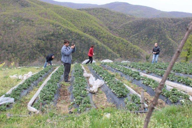 'Çilek Üretimi Geliştirme Projesi' Kapsamında İnceleme Gezisi