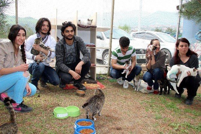 Hayvansever Öğrencilerden Anlamlı Proje