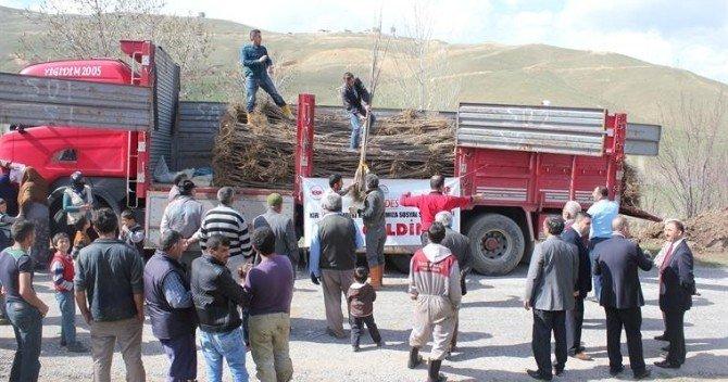 Kadın Çiftçilere 3 Bin 100 Adet Kiraz Fidanı Dağıtıldı