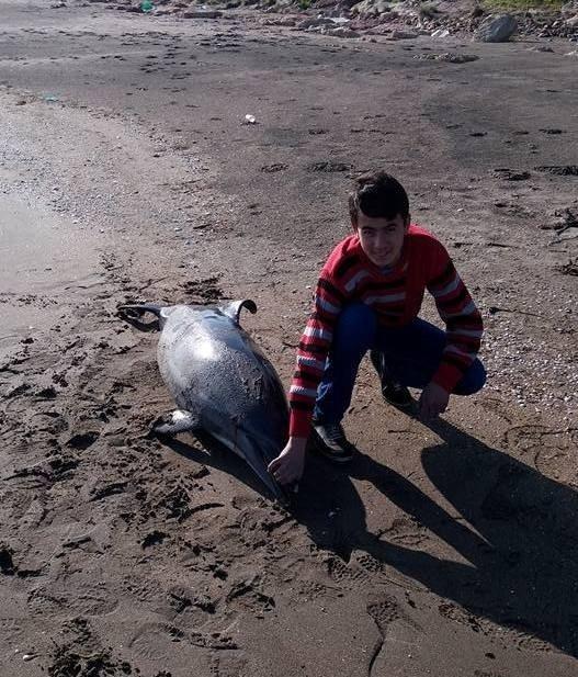 Yunus Balığı Karaya Vurdu