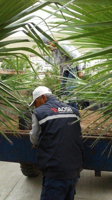 Aosb, Sanayicilere 3 Bin 500 Fidan Dağıttı