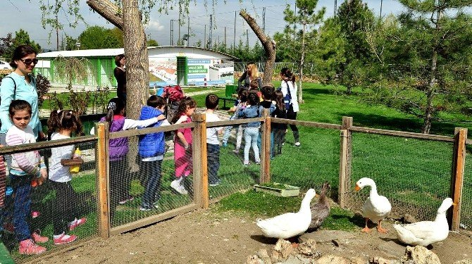 Doğal Yaşam Merkezi Çocuklara Hayvan Sevgisi Aşılıyor