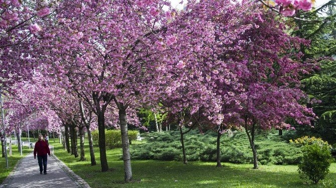 Dikmen Vadisi'nin Büyüleyici Çiçek Koridoru