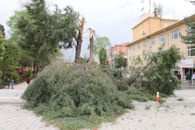 Şiddetli Rüzgar Ağaçları Kökünden Söktü