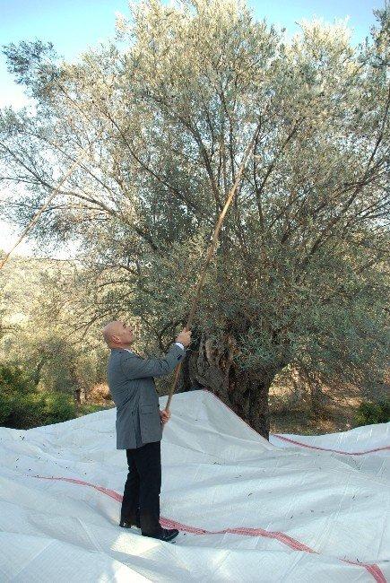 Ölümsüz Ağacın Lezzetleri Görücüye Çıkıyor