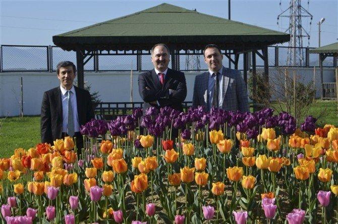 Sinop Üniversitesi'nde Lale Devri