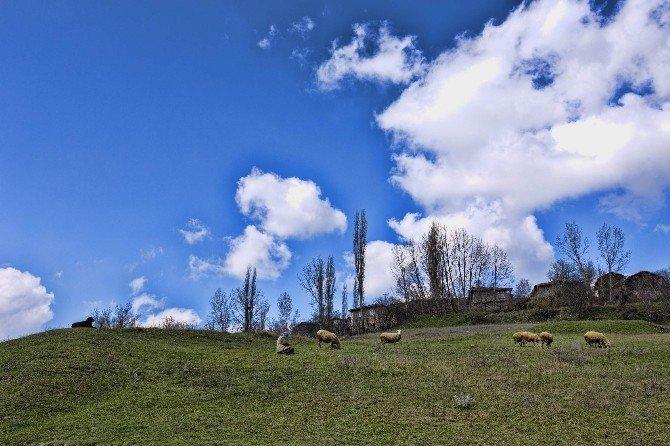 Uludağ'ın Yaylaları Turizme Açılıyor...