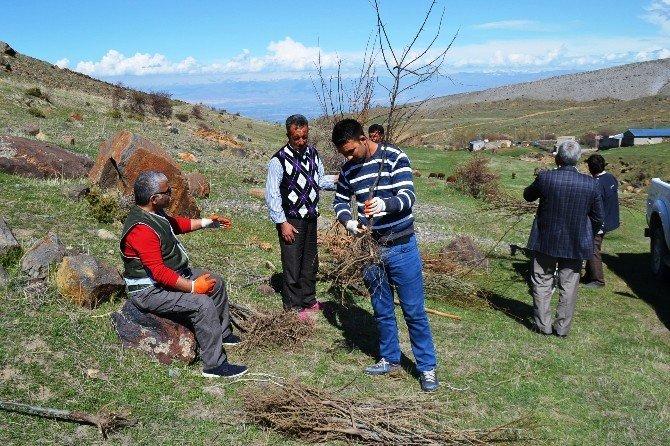 Iğdır'da Yaban Hayata Meyve Fidanı Dikildi