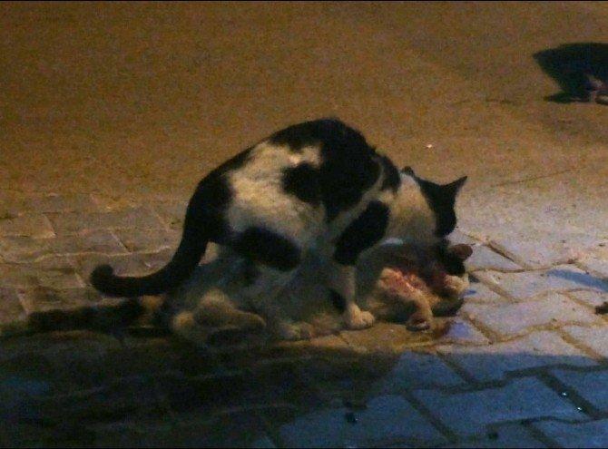 Çarpıp Kaçan Vicdansız Sürücüye Kediden Ders