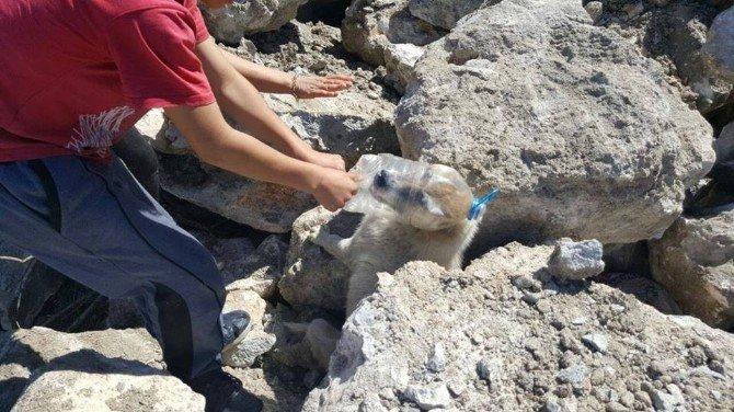 Başına Pet Şişe Geçen Köpek Kurtarıldı