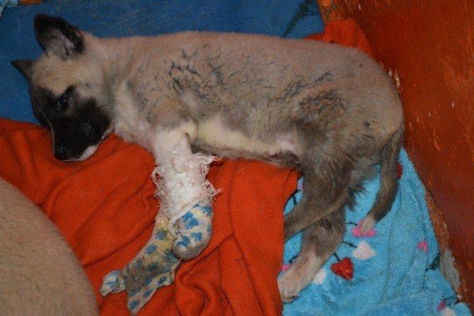 Diyarbakır'dan Sevk Edilen Köpekler Tedavi Altına Alındı