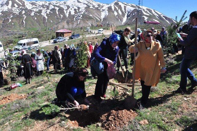 7 Bölgeden Gelen Kadınlar Bitlis'te Fidan Dikti