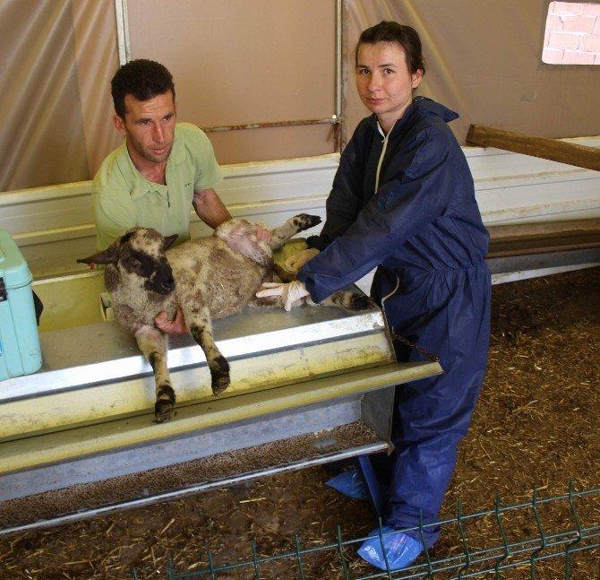 Hayvanların Hayatını Kurtaran Uygulama Bursa'da Başladı