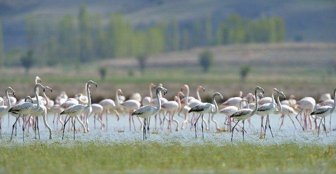 Flamingolar Burdur'u Terk Etmemiş