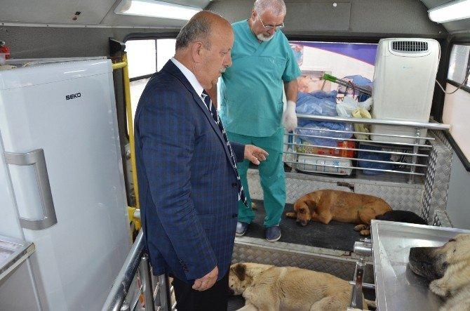 İznik'te Sokak Köpekleri Kısırlaştırılıyor