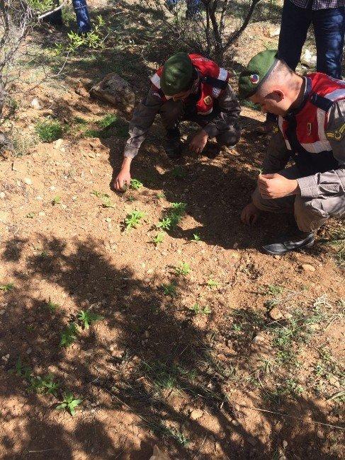 Kervansaray Dağında Uyuşturucu Operasyonu