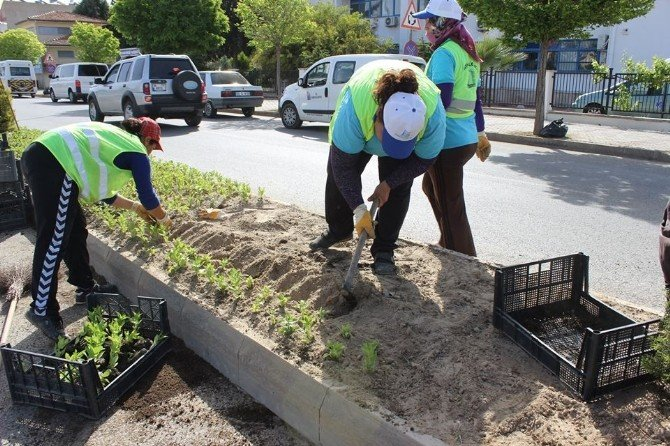 Didim'in Sokakları Serada Yetiştirilen Çiçeklerle Donatılıyor