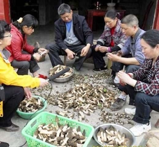 Türkiye'nin Rakipsiz Olduğu 20 Milyon Euroluk Mantar Pazarı Çinlilerin Eline Geçti